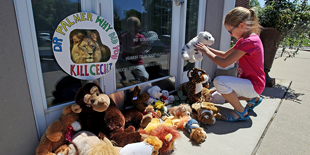 Resident Autumn Fuller, 10, places a stuffed animal at the doorway of River Bluff Dental clinic in protest against the killing of a famous lion in Zimbabwe, in Bloomington, Minnesota July 29, 2015. A Zimbabwean court on Wednesday charged a professional local hunter Theo Bronkhorst with failing to prevent an American from unlawfully killing 'Cecil', the southern African country's best-known lion. The American, Walter James Palmer, a Minnesota dentist who paid $50,000 to kill the lion, has left Zimbabwe. He says he did kill the animal but believed the hunt was legal and that the necessary permits had been issued. REUTERS/Eric Miller